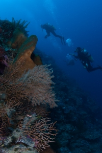 Bunaken Wall Diving